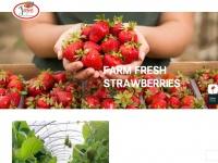 jagrofresh.com