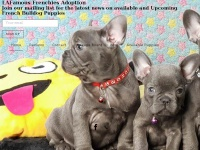 lafamousfrenchies.com