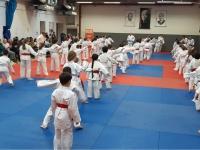 stalbansjudo.org.uk