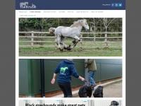 Tiagreyhounds.org