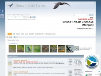 Ilbirds.com - Illinois Birders' Forum - Index