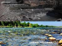 urbanifisheries.com