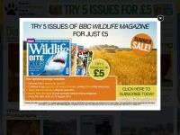 Discover Wildlife | Wildlife and photography at its best from BBC Wildlife Magazine