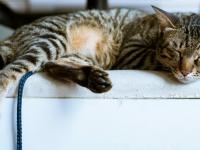 kittycatloft.com