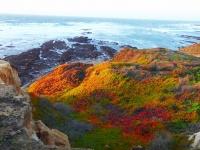 izenson.net