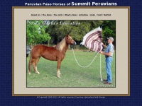 Peruvian Paso Horses of Summit Peruvians