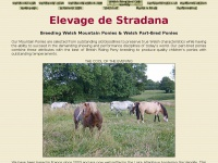 "Stradana.com - ""+document.domain+"""