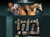 animal-art.org Thumbnail