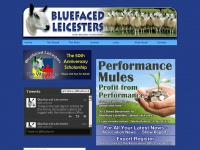 New Bluefaced Leicester