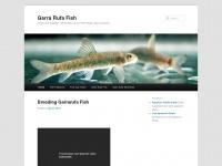 Garra rufa fish tanks and supplies for Garra rufa fish pedicure locations