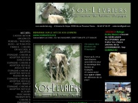 sos-levriers.org