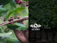 cafeimports.com