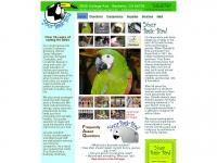 yourbasicbird.com