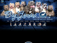 Biggeminikennels.com - Big Gemini Pitbulls| Largest XL Bully Pitbulls | Huge Blue Pitbull Puppies For Sale