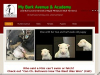 mybarkavenue.ca