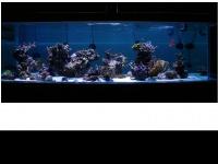 fishbrains.net Thumbnail