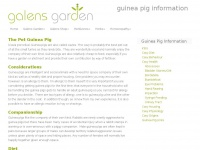 guinea-pig-information.co.uk
