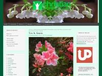 christianwomenonline.net Thumbnail