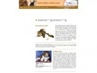 bijbo-chats.com