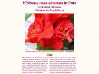 hibiscus-sinensis.com