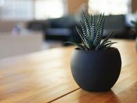 claranormal.com