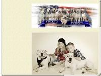 americanbulldog4u.de