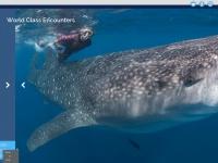 bigfishexpeditions.com