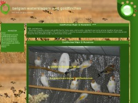 bestwaterslagers-goldfinches.com
