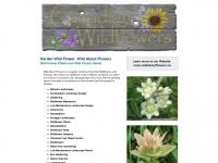 gardenwildflower.com