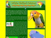 caique-parrot-pet-birds.com