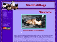 Siambalirags.com - Florida Siamese Kittens for Sale FL Balinese Breeders