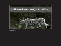 silverstormbengals.co.uk