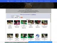 rescuecats.org