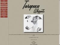 Tarapaca.ca
