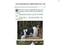 epagneul-breton.be Thumbnail