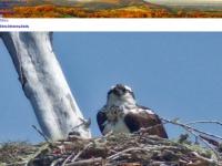 fragmentsfromfloyd.com