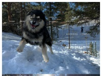 mountainlifemalamutes.com